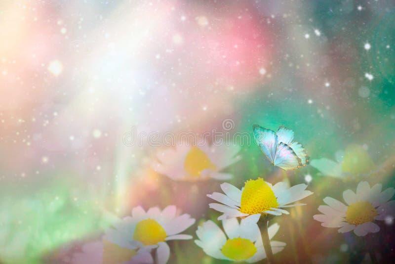 En försiktig blå fjäril på tusenskönor blommar i natur i mjuka pastellfärgade färger med en mjuk fokus, makro Drömlikt romantiskt arkivbild