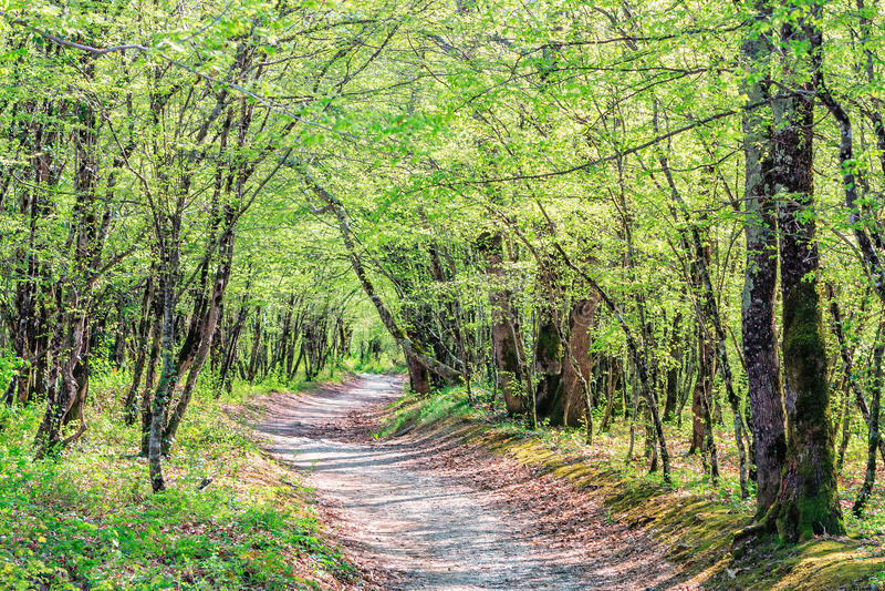 En försvinnabana som leder till och med träden i ett soligt härligt sceniskt landskap för sommarskog A royaltyfria bilder