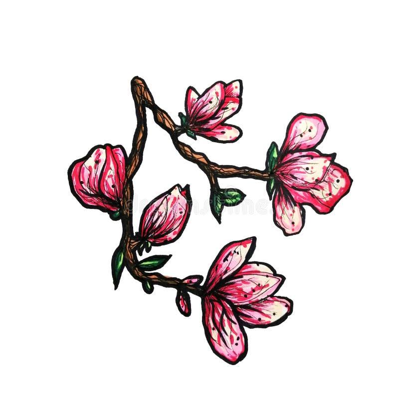 En f?rgrik blomma filial av magnolian hand-dras med mark?rer En magnolia p? en isolerad vit bakgrund vektor illustrationer