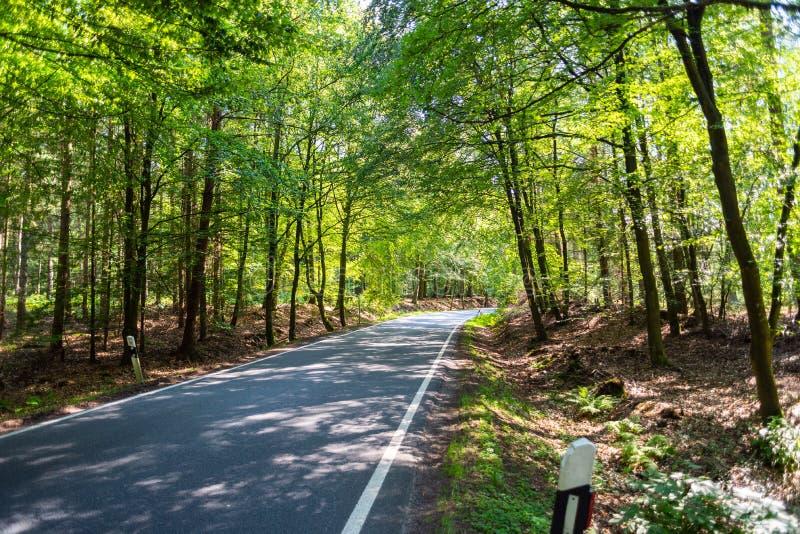 En farlig landsväg i en skog av renen som precis vimlar så i Tyskland royaltyfria foton