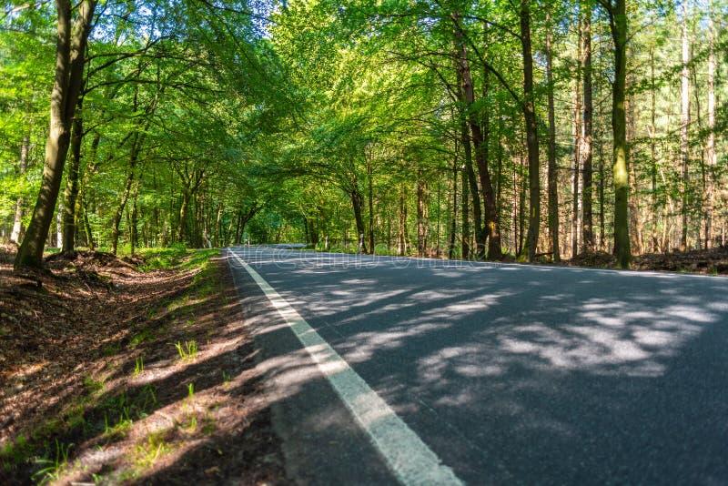 En farlig landsväg i en skog av renen som precis vimlar så i Tyskland royaltyfri foto