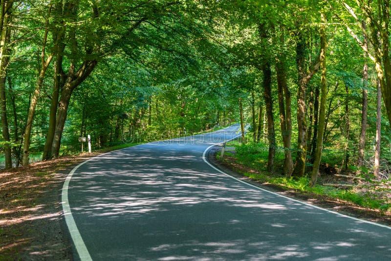 En farlig landsväg i en skog av renen som precis vimlar så i Tyskland royaltyfri fotografi