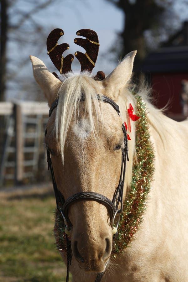 En festlig häst arkivbilder