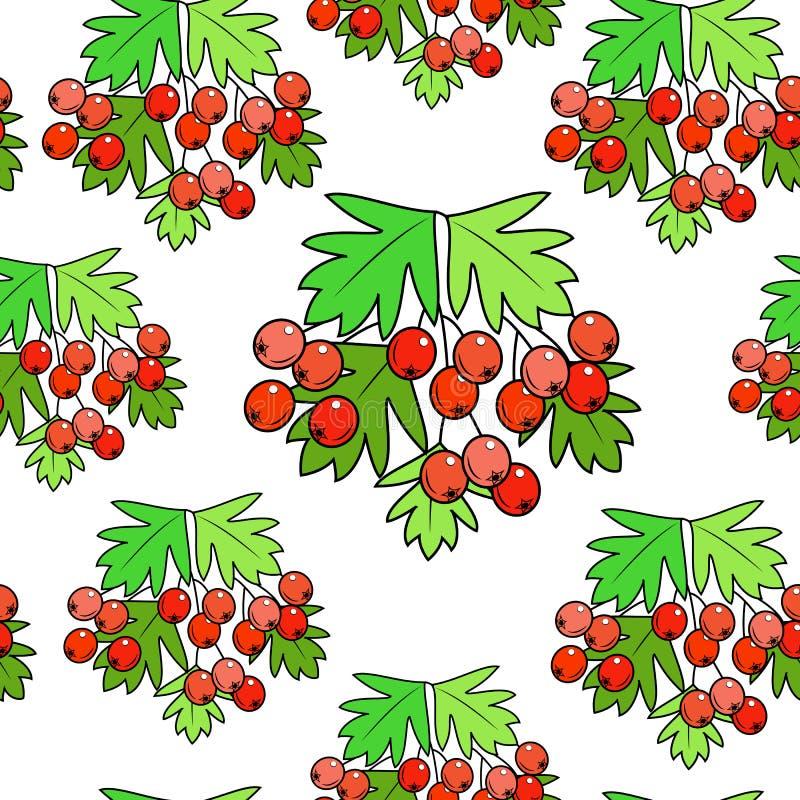 En filial av ett härligt hagtornbär, en medicinalväxt Välgörande till hälsa Tyst modell ocks? vektor f?r coreldrawillustration vektor illustrationer
