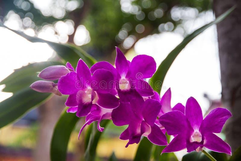en filial av orkidén i trädgården, härlig orkidé som blommar på th arkivfoto