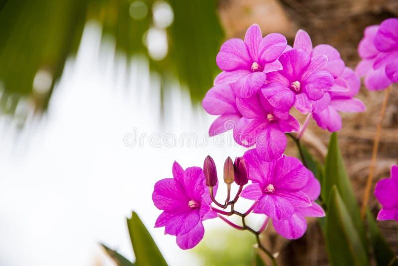 en filial av orkidén i trädgården, härlig orkidé som blommar på th arkivfoton