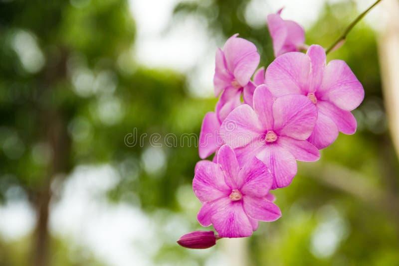 en filial av orkidén i trädgården, härlig orkidé som blommar på th arkivbild