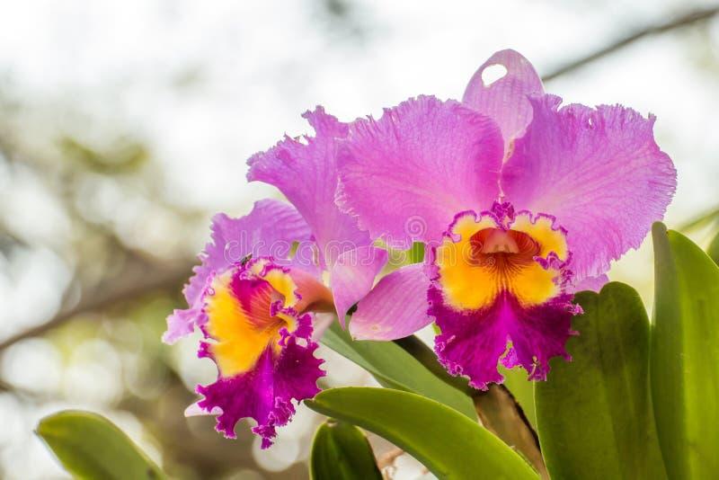 en filial av orkidén i trädgården, härlig orkidé som blommar på thee arkivfoton