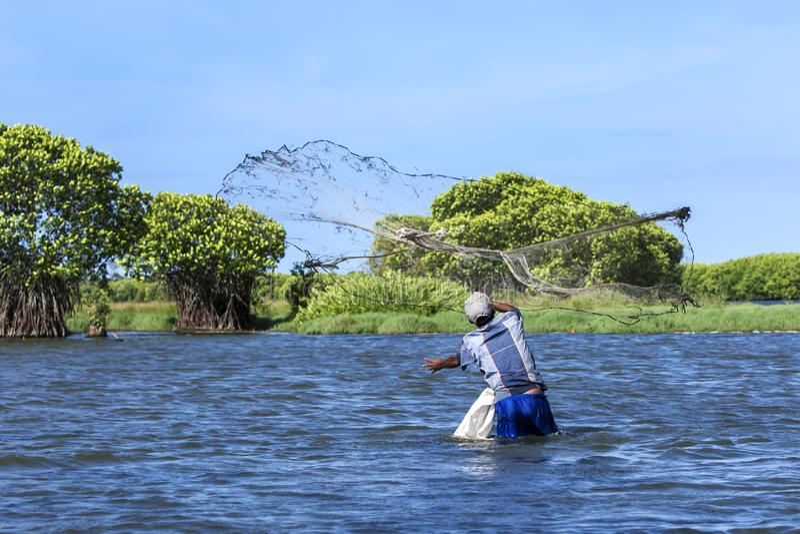 En fiskare som gjuter hans netto royaltyfri bild