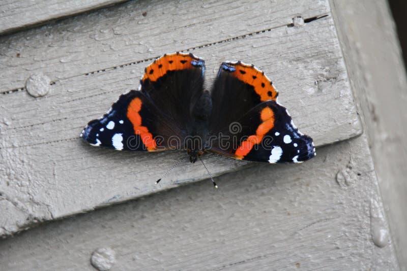 En fjäril royaltyfri foto
