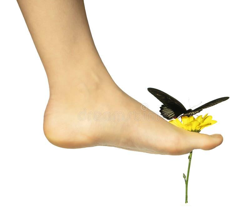 En fjäril på en blomma rymde med den kala foten för flicka` som s isolerades på vit bakgrund royaltyfri bild