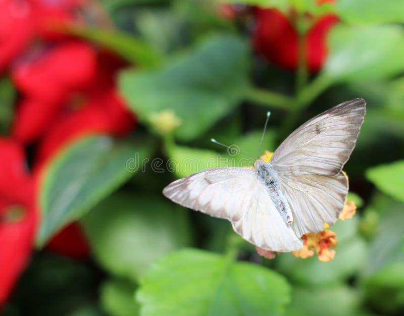 En fjäril på drivhuset royaltyfria foton
