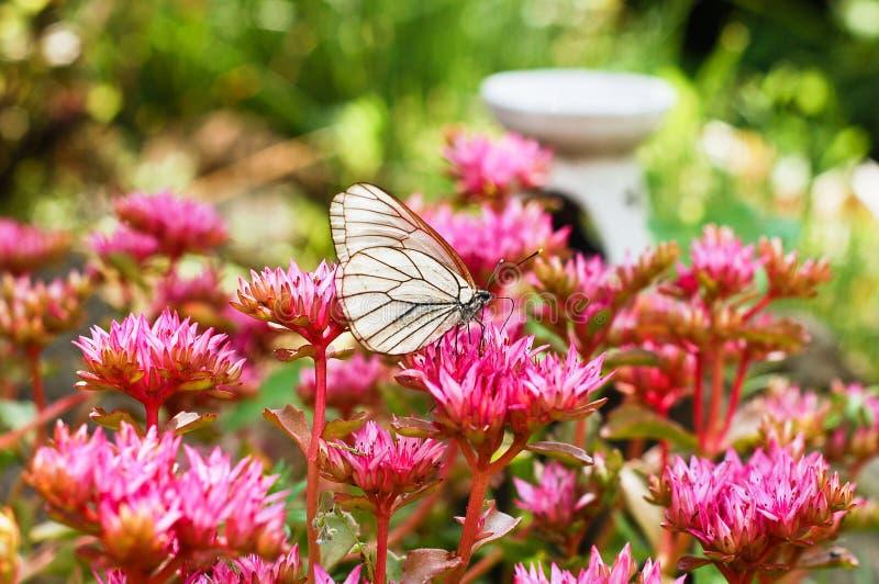 En fjäril sitter på en ljus blomma i klart soligt väder arkivbilder