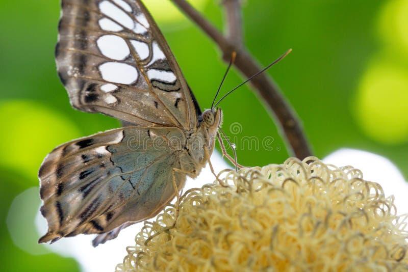 En fjäril som matar i ett träd royaltyfri fotografi