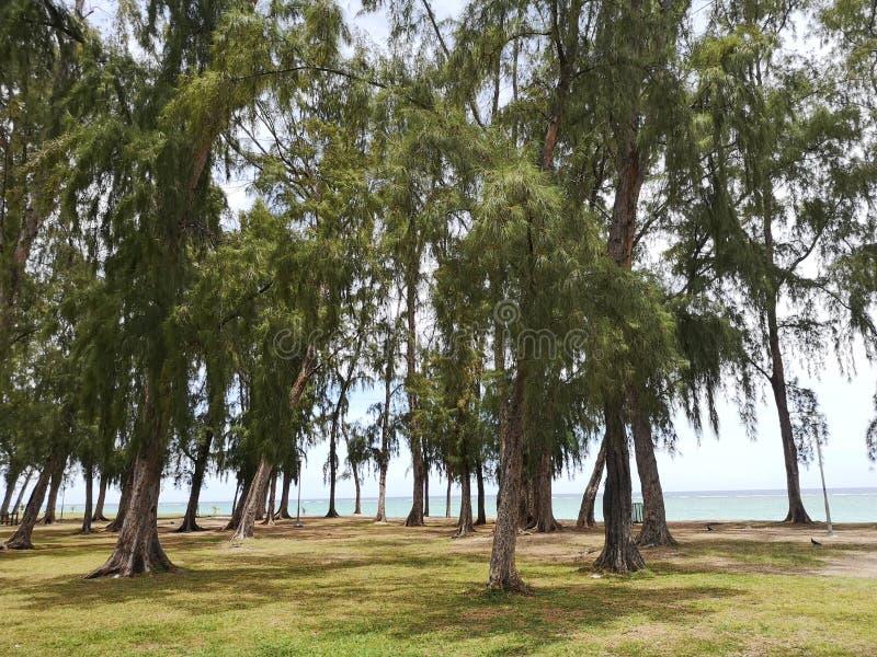 En Flac, Mauritius di Flic fotografia stock