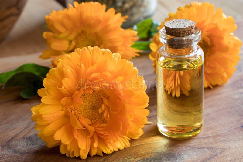 En flaska av nödvändig olja för calendula med calendulaen blommar royaltyfri fotografi