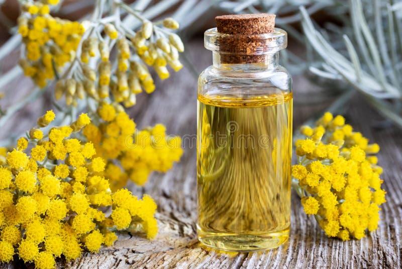 En flaska av nödvändig olja för helichrysum med ny blommande helich royaltyfri fotografi