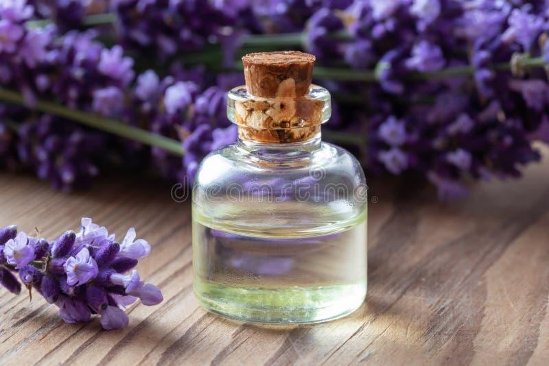 En flaska av nödvändig olja för lavendel och den nya växten royaltyfria bilder