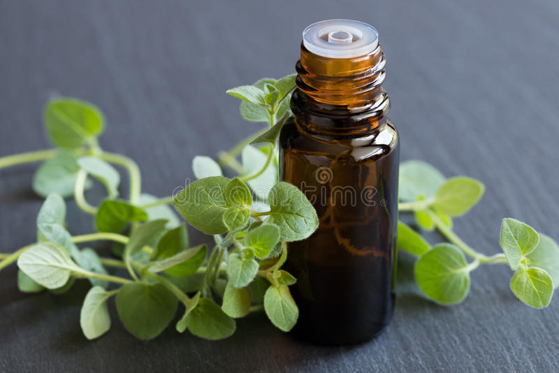 En flaska av nödvändig olja för oreganon med nya oreganosidor royaltyfri foto