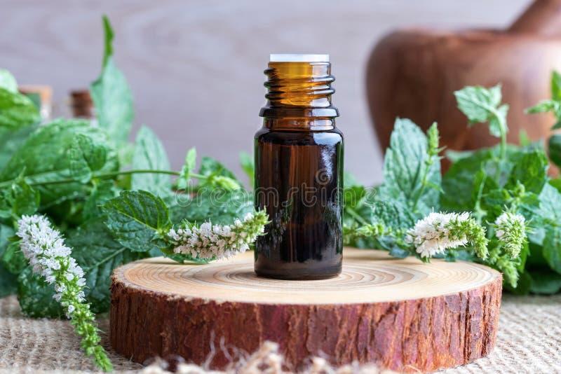 En flaska av nödvändig olja för pepparmint med ny blommande pepperm royaltyfria bilder