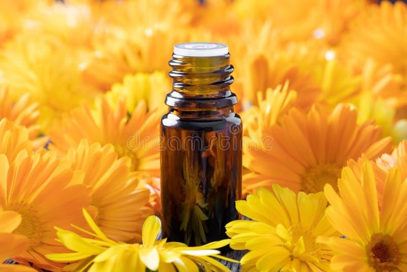 En flaska av nödvändig olja med calendulablommor royaltyfria bilder