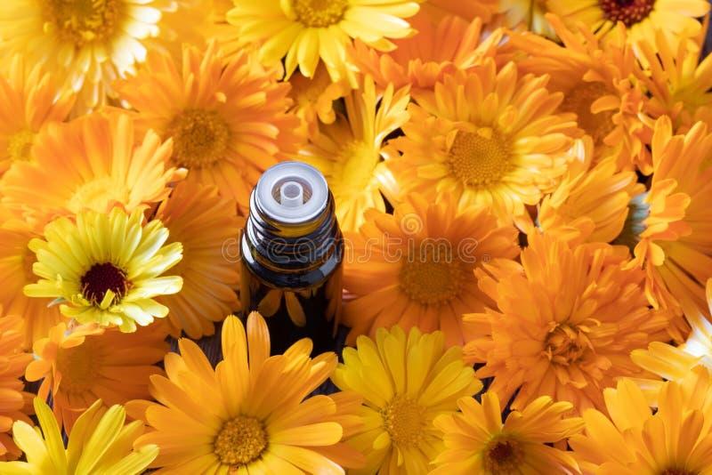 En flaska av n?dv?ndig olja f?r calendula med calendulaen blommar fotografering för bildbyråer