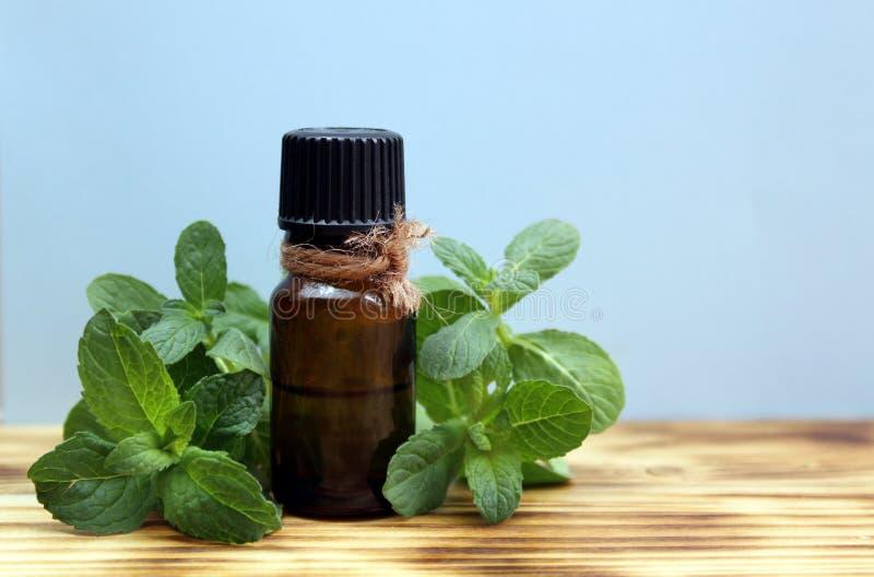 En flaska av olja och en kvist av mintkaramellen ?r p? tabellen fotografering för bildbyråer