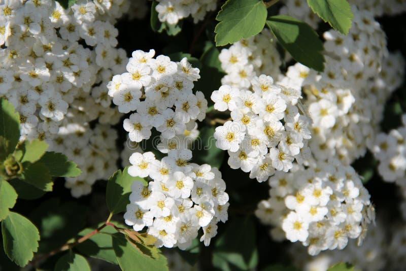 En fleur image stock