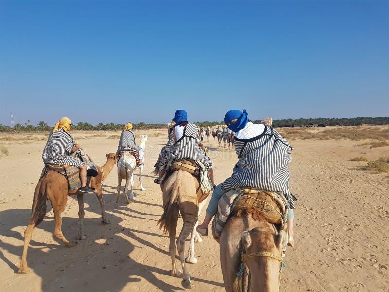 En flicka i en ljus halsduk rider en kamel i Sahara Desert _ Foto från lopp royaltyfri fotografi