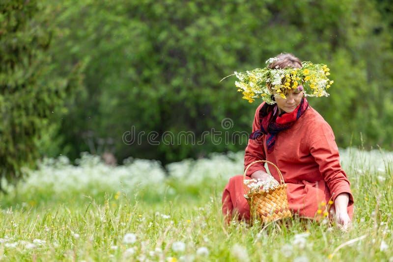 En flicka i en nationell dräkt och en krans på hennes huvud samlar bär i en korg, på en grön gräsmatta in arkivbilder