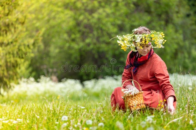 En flicka i en nationell dräkt och en krans på hennes huvud samlar bär i en korg, på en grön gräsmatta in royaltyfria bilder