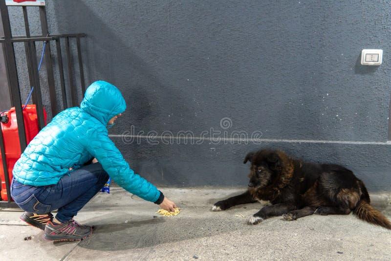 En flicka i omslag matar den tillfälliga hunden royaltyfri bild