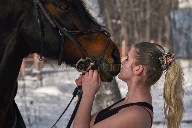 En flicka med långt blont hår meddelar med hennes favorit- häst Flickan älskar djur solig dagfjäder Närbild arkivfoton
