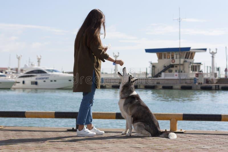 En flicka med långt hår behandlar hunden en fest arkivbilder