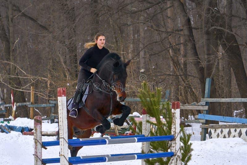 En flicka på en häst hoppar över barriären Utbildningsflickajockey som rider en häst En molnig vinterdag royaltyfria bilder