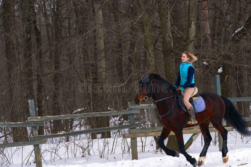 En flicka på en häst hoppar galopper En flicka utbildar att rida en häst i en liten paddock En molnig vinterdag royaltyfri bild