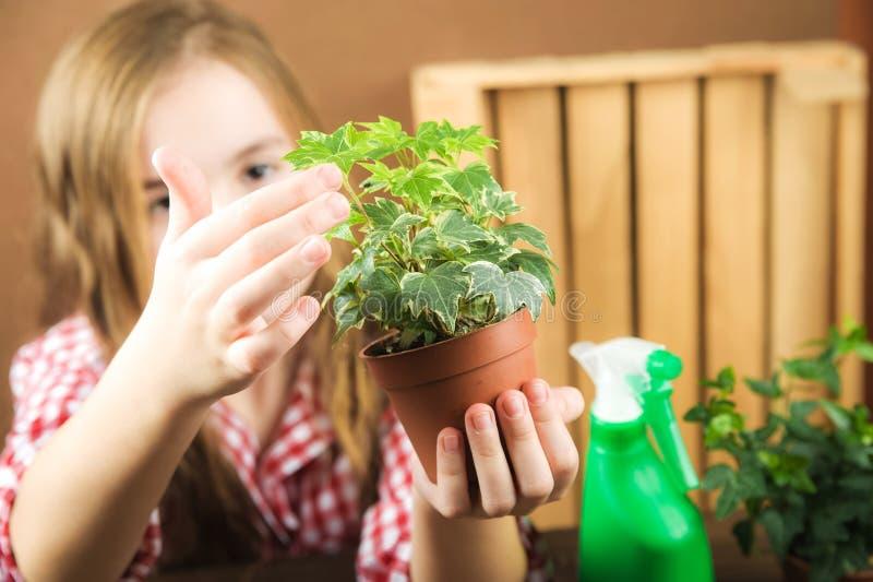 En flicka rymmer en kruka med en blomma en flicka i en plädskjorta i hennes händer en jordning med ljungmurgrönan Transplantera i fotografering för bildbyråer