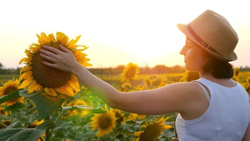 En flicka trycker på en solroshatt i ett fält under solnedgång arkivbild