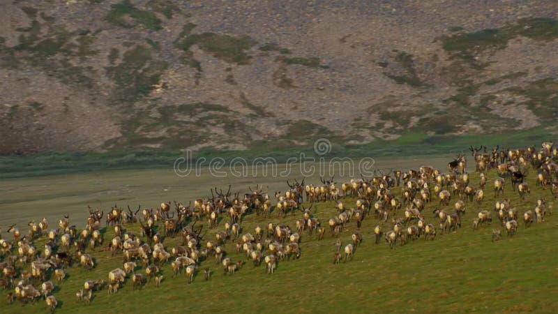 En flock av djur som söker nytt gräs, savann, Afrika royaltyfri foto