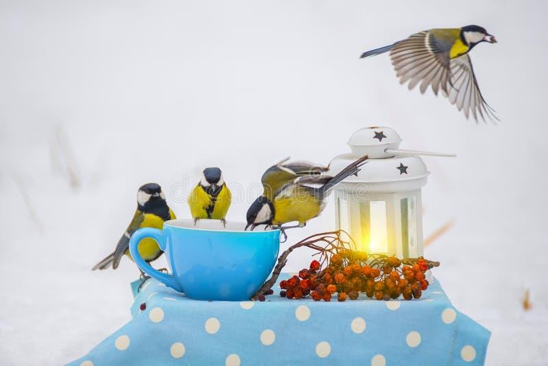 En flock av fågelmesen att äta korn i en kopp i vintern parkerar Naturlig vintersnöbakgrund Sagolikt foto royaltyfri foto