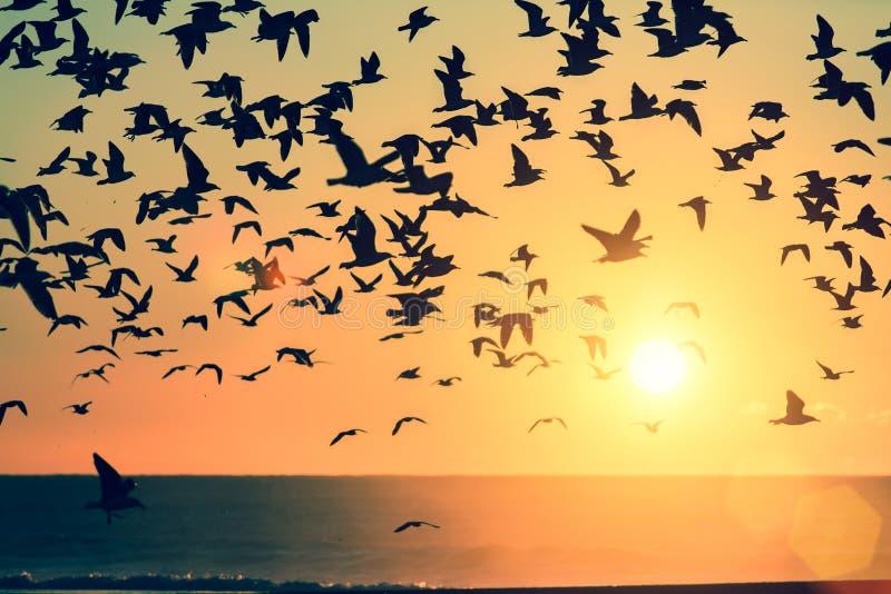 En flock av fåglar över Atlanticet Ocean under solnedgång arkivbild
