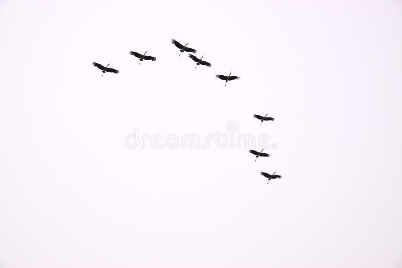En flock av fåglar med vit bakgrund royaltyfria bilder