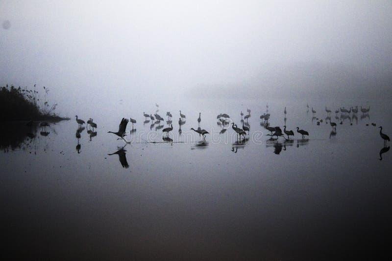 En flock av flyttfåglar på sjön royaltyfri bild