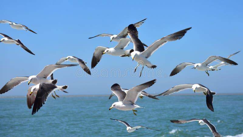 En flock av seagulls arkivfoton