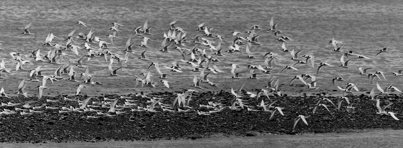 En flock, Greymouth, Nya Zeeland royaltyfria foton