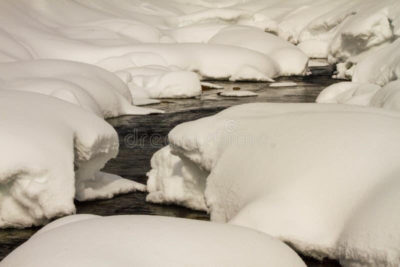En flod i en snöig skog royaltyfri foto