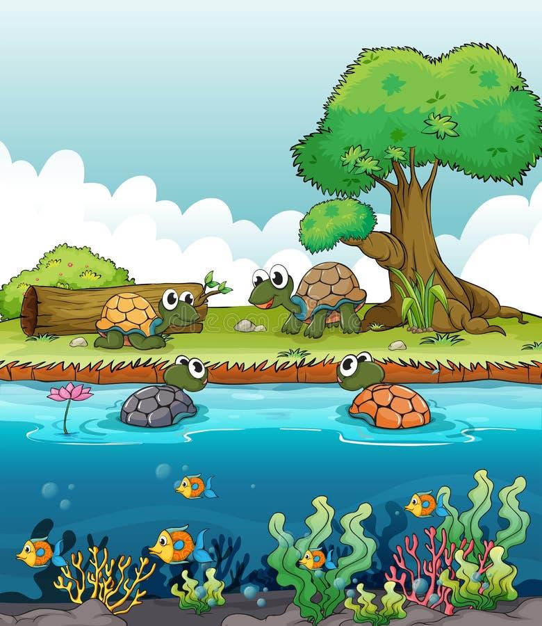 En flod och le sköldpaddor stock illustrationer