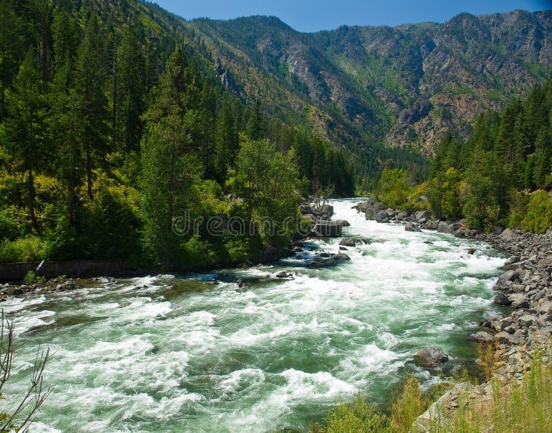 En flod som flödar till och med en bergskog royaltyfri fotografi