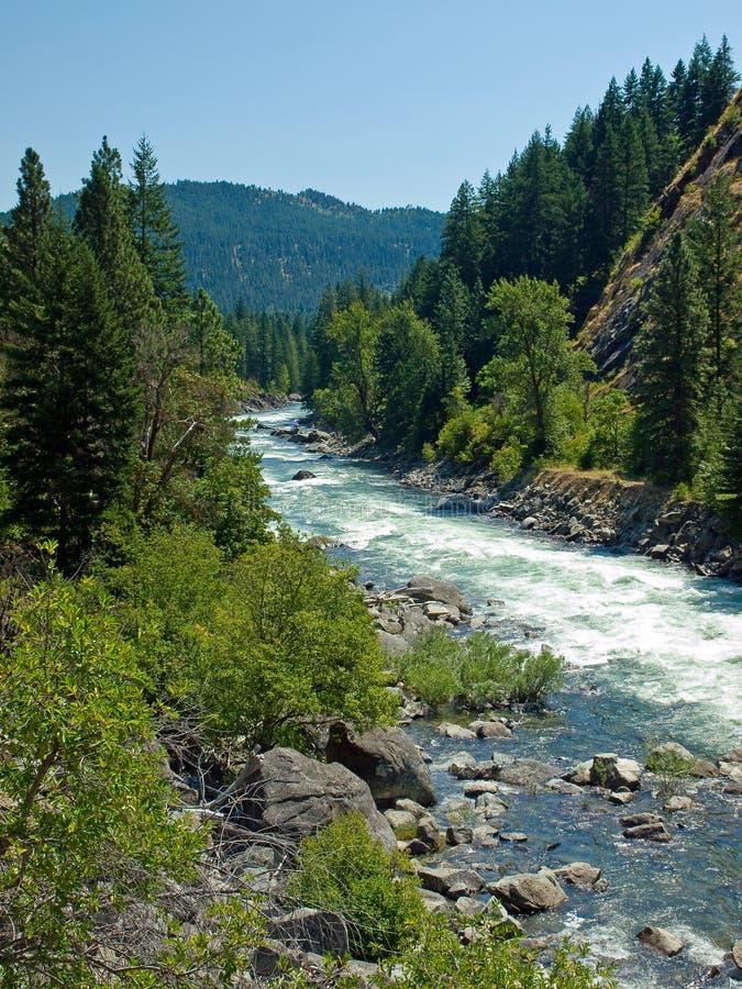 En flod som flödar till och med en bergskog royaltyfri bild