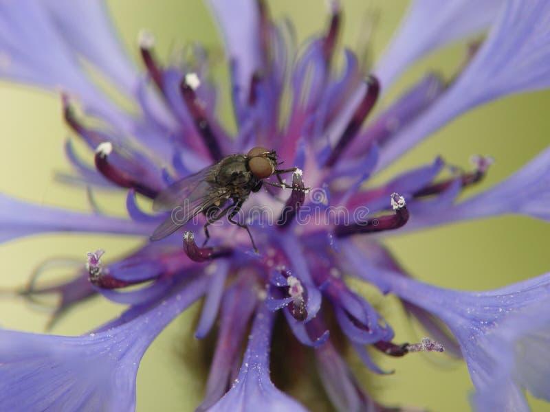 En fluga fotografering för bildbyråer